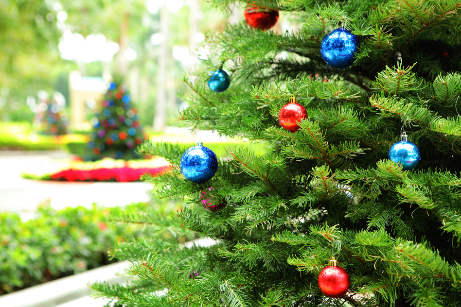 Real vs. Fake Christmas Trees: Which