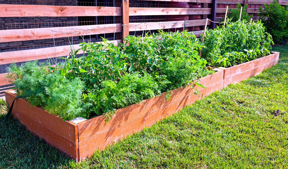 7 Rookie Mistakes in Your Vegetable Garden