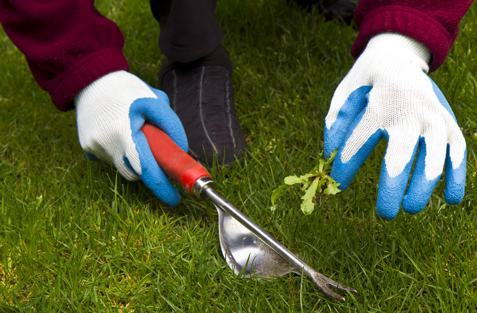 How to Prevent Weeds from Ever Sprouting