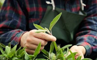 Why Gardening is Good for Your Heart